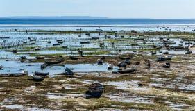处于低潮中种田在努沙Lembongan海岛上的海草 免版税库存照片