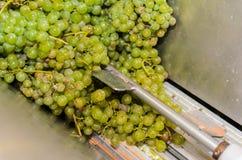 处理在葡萄酒酿造的钢压碎器的白葡萄 免版税库存照片
