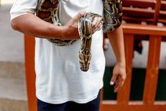 处理展示的人一条蛇 库存图片