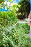 处理灌木的农夫由在后院的杀虫剂 库存照片