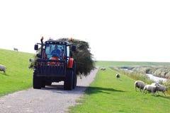 备草粮运输沿荷兰绵羊堤堰,阿默兰岛的拖拉机 免版税库存照片