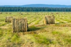 备草粮,收获,许多领域的干草堆 免版税图库摄影