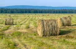 备草粮,收获,许多领域的干草堆 免版税库存图片