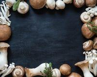 复制各种各样的未加工的蘑菇类型空间框架在黑暗的背景的 库存图片