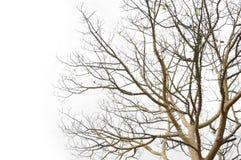复杂结构树 免版税库存照片