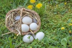 复活节假日概念:柳条筐用在绿草的鸡蛋 图库摄影