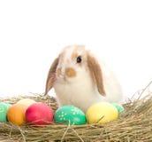 复活节兔子在五颜六色的鸡蛋附近坐 库存图片