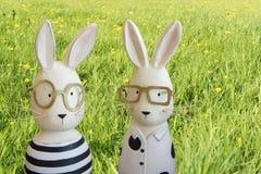 复活节兔子在春天草甸 库存照片