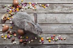 复活节兔子用在木背景的朱古力蛋 免版税库存照片