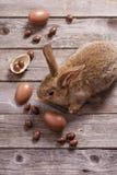 复活节兔子用在木背景的朱古力蛋 库存照片