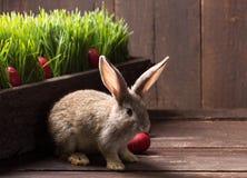 复活节兔子用红色鸡蛋 免版税库存照片