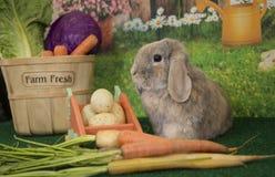 复活节兔子砍在篮子的有耳的兔子用色的鸡蛋和开花的春天花 免版税库存照片