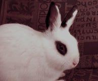 复活节兔子 库存图片