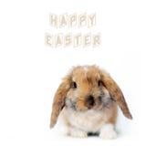 复活节小的兔子 库存图片