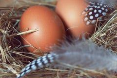 复活节巢用鸡蛋和羽毛 免版税库存图片