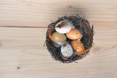 复活节巢的顶视图与桔子,棕色和白色鹌鹑蛋装饰的与在木背景的羽毛 图库摄影