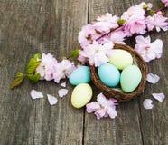 复活节彩蛋和佐仓开花 库存图片