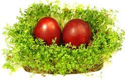 复活节彩蛋和水芹 免版税图库摄影