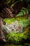 复活节彩蛋在日出的森林里在森林里 库存图片