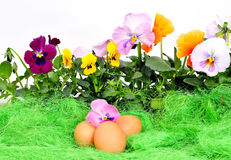 复活节彩蛋开花弹簧 库存图片
