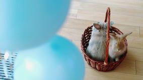 复活节快乐,在篮子的兔宝宝 股票视频