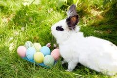 复活节快乐!背景用在篮子的五颜六色的鸡蛋 免版税库存图片