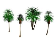 复活节棕榈树 库存照片
