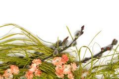 复活节植物布置 库存图片