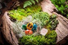复活节的五颜六色的鸡蛋在日出的森林里 图库摄影