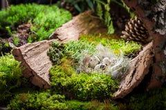 复活节的鸡蛋在日出的森林里在青苔 库存图片