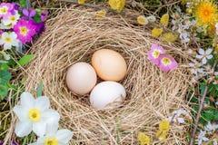 复活节结构的在秸杆、枝杈开花的杨柳和报春花花巢的鸡蛋  免版税库存照片