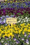 复活节花市场星期一 库存图片