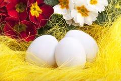 复活节装饰用鸡蛋和开花的报春花 库存照片