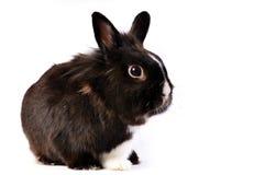 复活节野兔一点 免版税库存图片