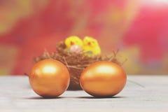 复活节金黄鸡蛋和黄色母鸡,在巢的鸡鸟 库存图片