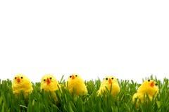 复活节鸡 免版税库存图片