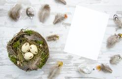 复活节Eggsin巢和羽毛在白色木背景冠上veiw大模型 白纸 免版税库存照片