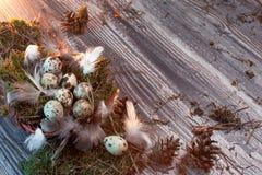 复活节信件装饰用鹌鹑蛋、gnezom、青苔、羽毛、杉木杨柳的锥体和枝杈在木背景的 库存照片