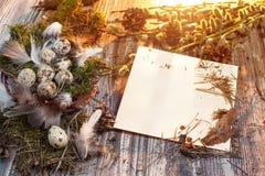复活节信件装饰用鹌鹑蛋、gnezom、青苔、羽毛、杉木杨柳的锥体和枝杈在木背景的 库存图片