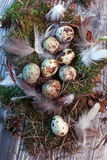 复活节信件装饰用鹌鹑蛋、gnezom、青苔、羽毛、杉木杨柳的锥体和枝杈在木背景的 免版税库存图片
