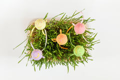 复活节假日绿色属性集合 免版税图库摄影