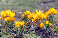 复活节兔子和番红花 免版税库存照片
