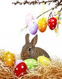 复活节兔子和鸡蛋 库存照片