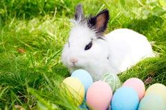 复活节兔子用在一个草甸的鸡蛋在春天 库存照片