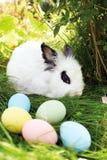 复活节兔子用在一个草甸的鸡蛋在春天 免版税图库摄影