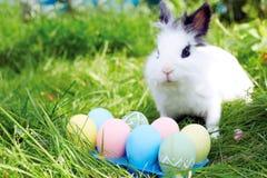 复活节兔子用在一个草甸的鸡蛋在春天 免版税库存图片