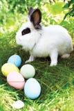 复活节兔子用在一个草甸的鸡蛋在春天 库存图片