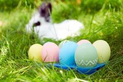 复活节兔子用在一个草甸的鸡蛋在春天 免版税库存照片