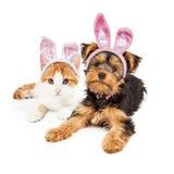 复活节兔子约克夏小狗和小猫 免版税库存照片