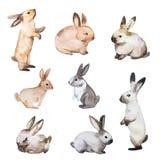 复活节兔子设置了 手拉的剪影和水彩例证 库存图片